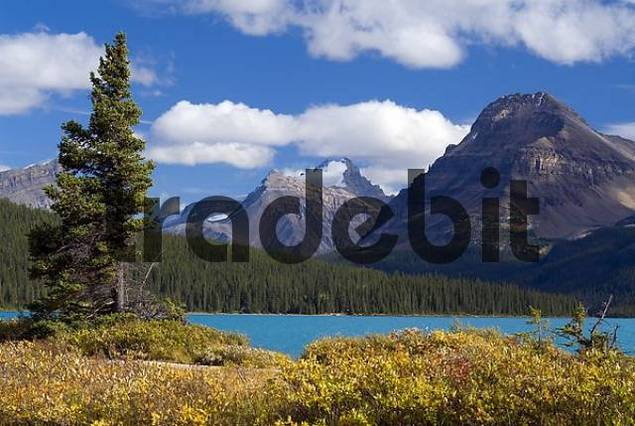 view of Mount Hector and Bow Peak towering over Bow Lake, Bow Valley, Banff National Park, Alberta, Canada