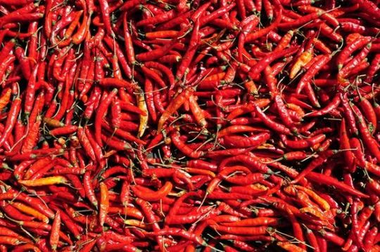 Many chili peppers, Laos, Southeast Asia, Asia
