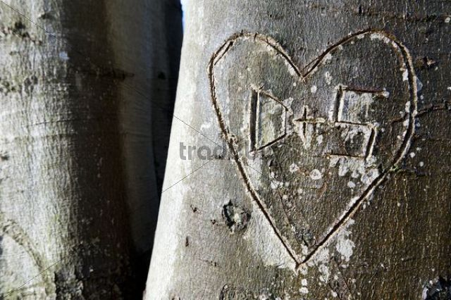Tree with a carved heart and the letters D and S, Stuttgart, Baden-Wuerttemberg, Germany, Europe