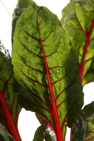 how to cook swiss chard leaves