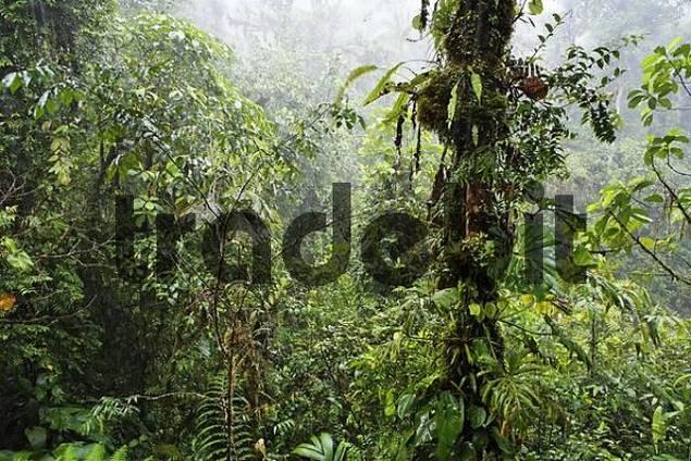 rain in rainforest, Rara Avis, Las Horquetas, Costa Rica