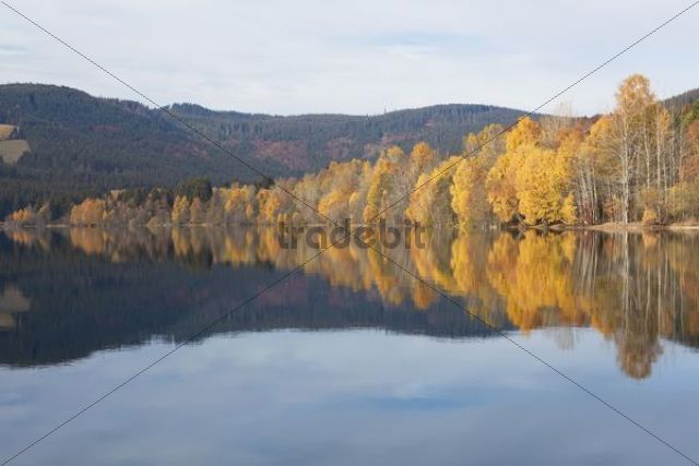 Autumn on Schluchsee Lake in the Black Forest, Baden-Wuerttemberg, Germany, Europe