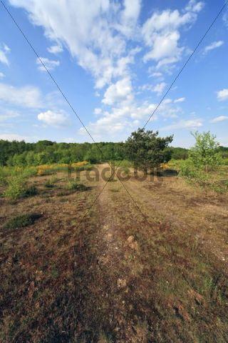 Heathland, Geisterbusch, Wahner Heide, Cologne, North Rhine-Westphalia, Germany, Europe