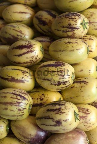 Pepino Dulce or Melon Pear (Solanum muricatum)