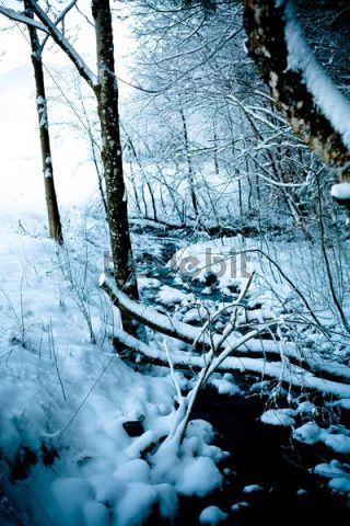 Snow-covered stream, Berchtesgaden, Berchtesgadener Land, Bavaria, Germany, Europe