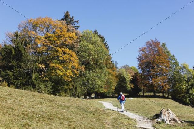 Trail to Sonntratn Mountain, Gaissach, Isarwinkel, Upper Bavaria, Bavaria, Germany, Europe