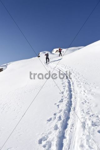 Snowshoers during the ascent to Uribrutto Mountain above the Passo Valles, Dolomites, Trentino, Italy, Europe