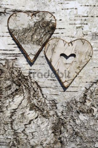 Two hearts made of birch bark on birch bark