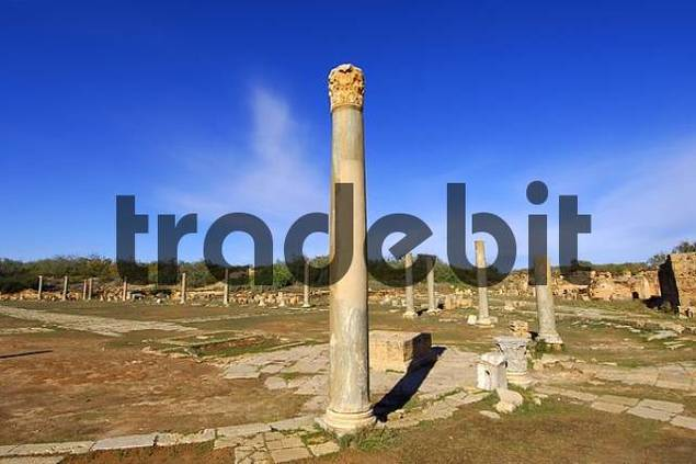 Column with corinthian capital, Ruins of the Roman City Leptis Magna, Libya