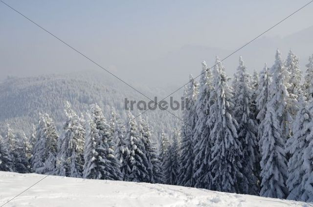 Snow-covered winter landscape, inversion weather conditions at Schwarzenberg mountain, near Elbach, Leitzachtal, Bavaria, Germany, Europe