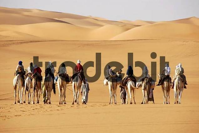 Camel trekking towards sanddunes in the desert Mandara Libya
