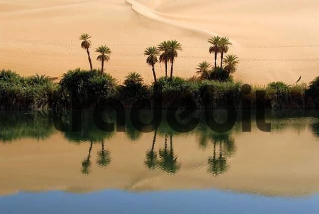 Poenix palm trees and sanddunes mirror in the water oasis Um el Ma Mandara Libya