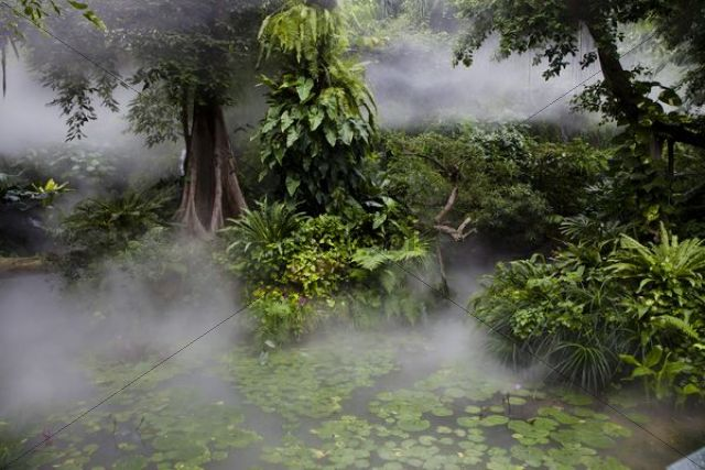 Tropical rainforest in fog, Yunnan Province, China, Asia