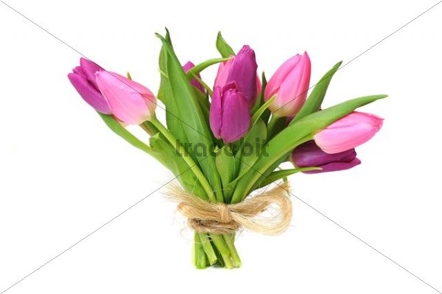 Bouquet of Tulips (Tulipa)