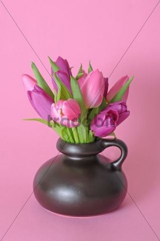 Bouquet of Tulips (Tulipa) in a vase