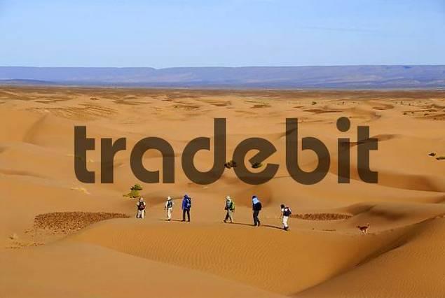 Desert trekking tourists hike in endless sanddunes near Mhamid Morocco