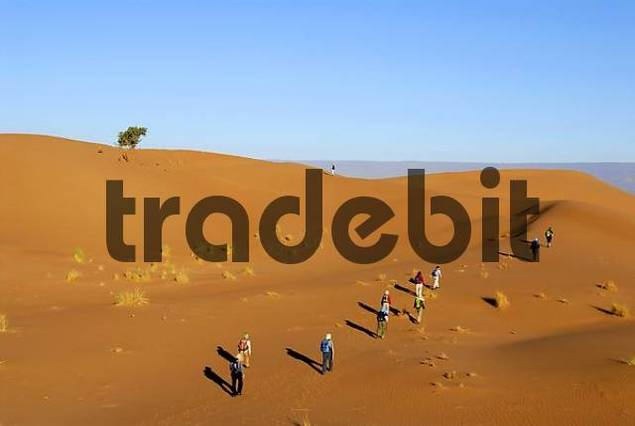 Desert trekking tourists hike up a sanddune near Mhamid Morocco
