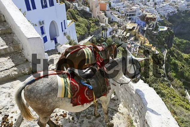 donkeys at one of the steep alleys at the caldera, Thira, Santorini, Greece