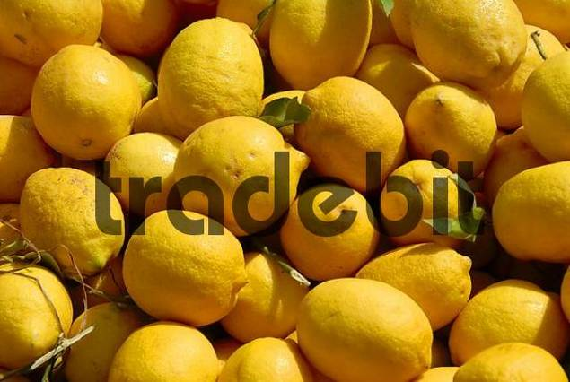 Yellow Lemons at a market Casablanca Morocco