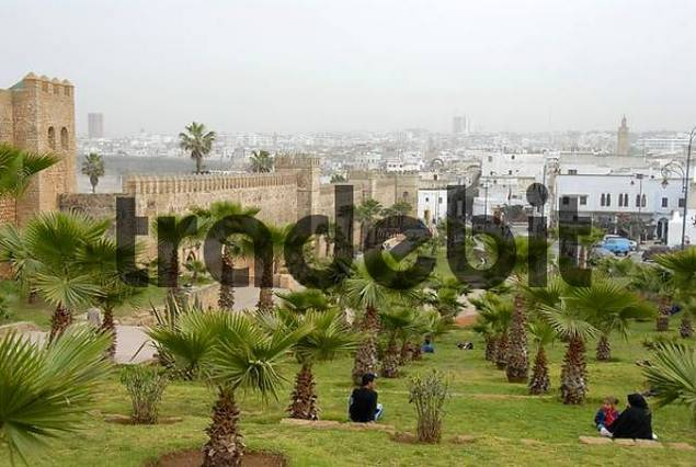 Palm trees in a park at ancient city walls Kasbah des Oudaias Rabat Morocco
