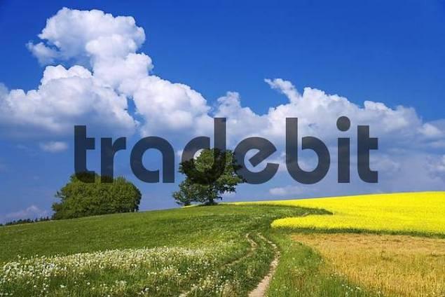 Landscape, Sense district, canton Fribourg, Switzerland