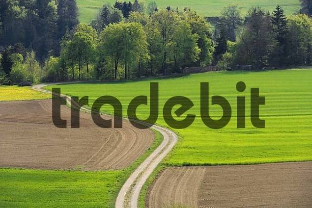 Country lane and fields in spring, Sense district, canton, Fribourg, Switzerland