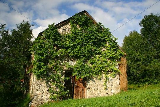 Old cottage covered with vine, Slovenia, Europe