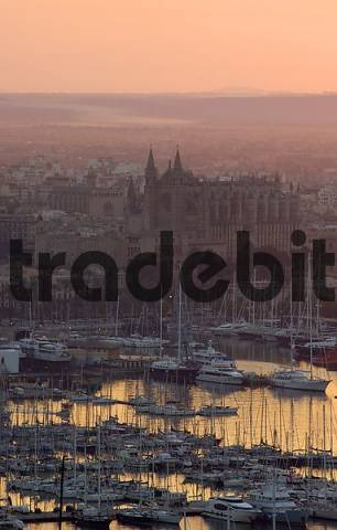View on harbour, old town and cathedral at sunrise, Palma, Majorca, Spain