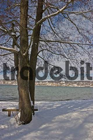 BRD Germany Bavaria Upper Bavaria Starnberg At the Starnberger Lake Winter Picture Alder at the Lake in Snow View to Starnberg an its Church