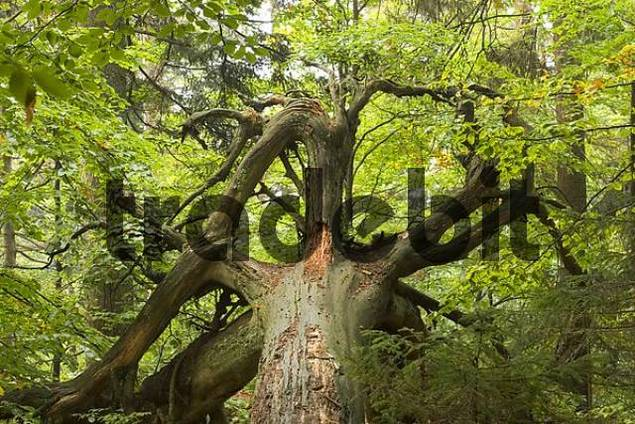 Bavarian Forest National Park Germany