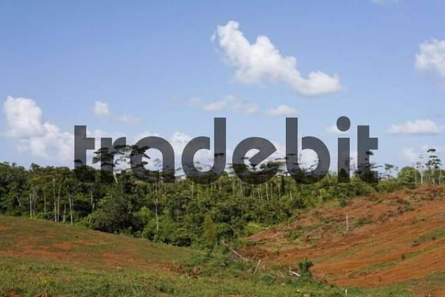 clearing of rainforest near Pital, Costa Rica