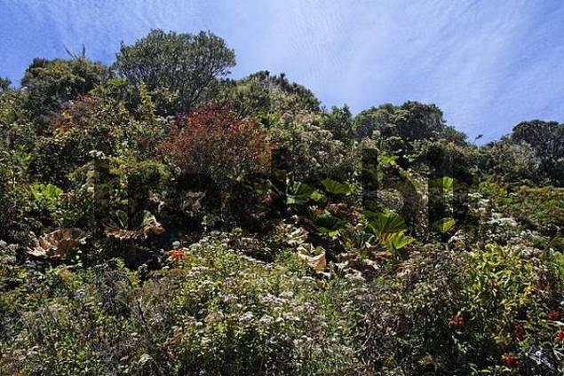 vegetation in Irazu volcano National Park, 3400mNN, Costa Rica