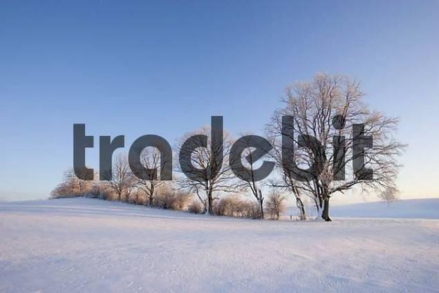 winter morning Upper Bavaria Germany
