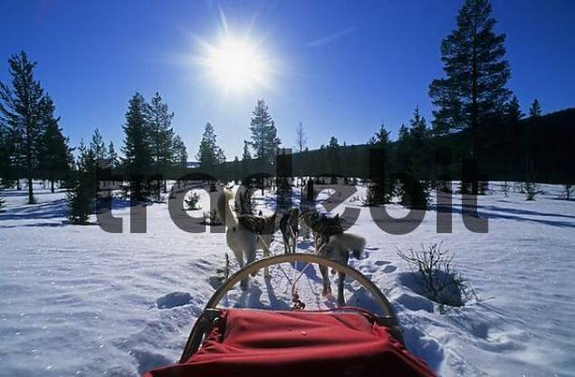 Sledge dog touring in Fulufjell Norway