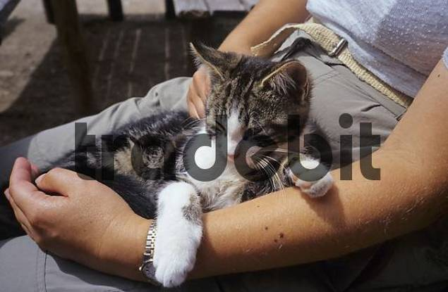 young house cat lying on lap of a woman