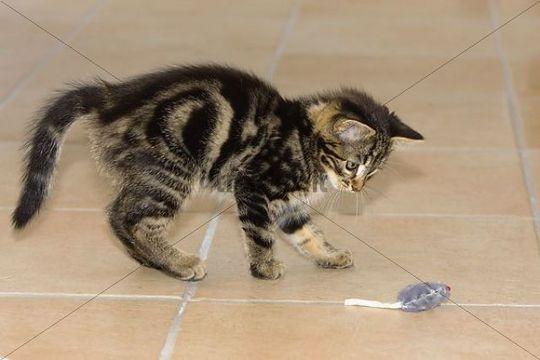 کاغذ بازی گربه