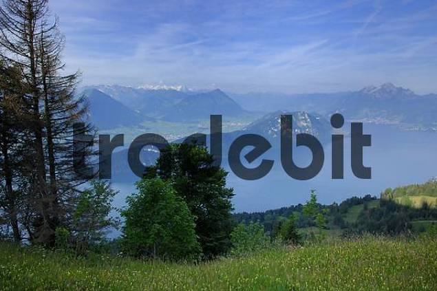View from the Felen path on the Rigi to the Lake Lucern, Switzerland