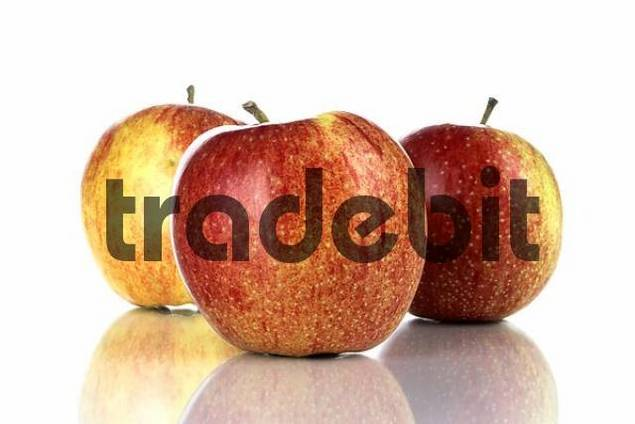 Apples Malus
