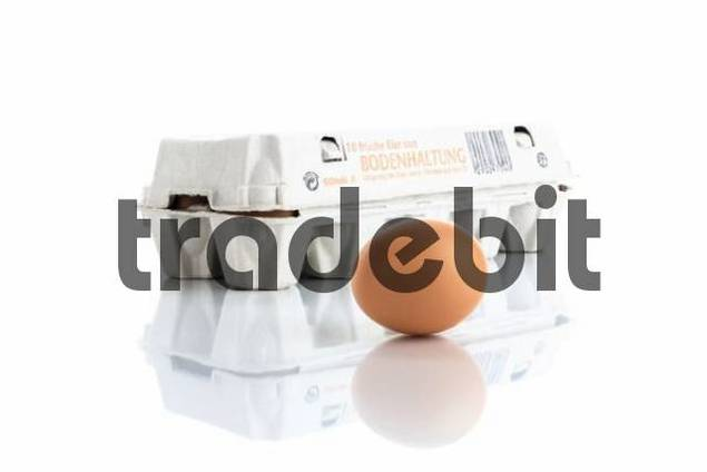 Egg carton with an egg