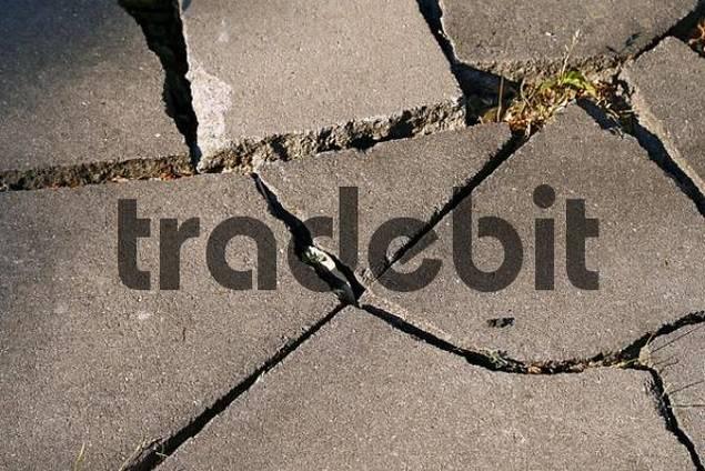 broken sidewalk flagstone