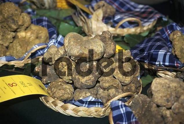 Asti Piemonte Piedmont Italy truffle fair exibition and market during November