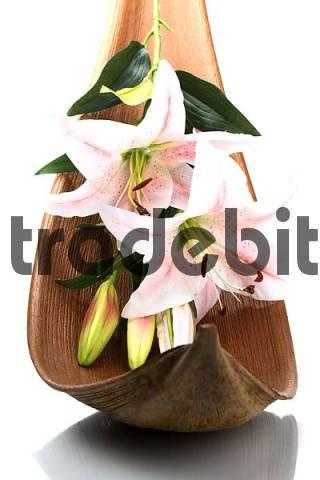 lily in palm leaf