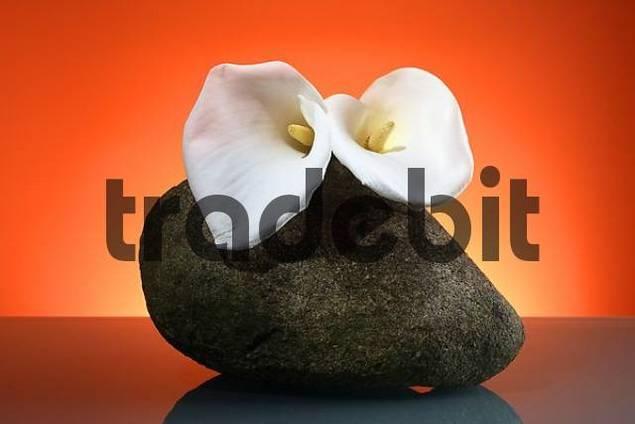 white calla, stone