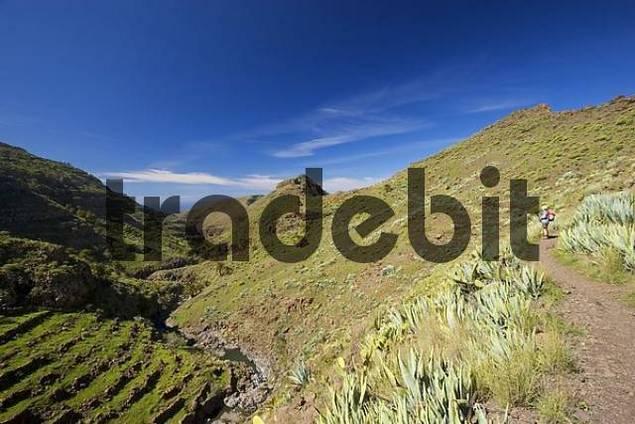 Barranco de Argaga La Gomera Canary Islands