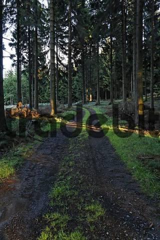 forest track, coniferous forest, Germany, North Rhine-Westphalia, Ebbegebirge