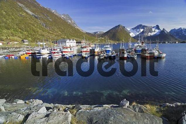 Fishing boats at the jetty, port of Austvagoy, Lofoten, Norway, Scandinavia, Europe