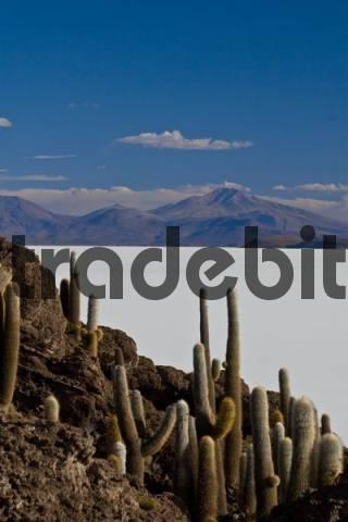 Isla del pescado in the Salar de Uyuni, Uyuni, Bolivia