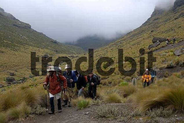 Group of trekkers with local guide on a footpath in fen landscape Mount Kenya National Park Kenya
