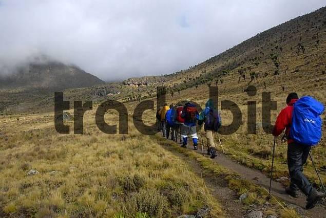 Group of trekkers on a footpath in fen landscape Mount Kenya National Park Kenya