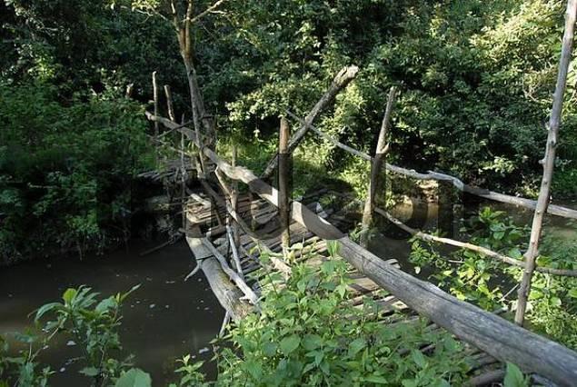 Wild wooden bridge over a creek in the jungle Mount Kenya National Park Kenya